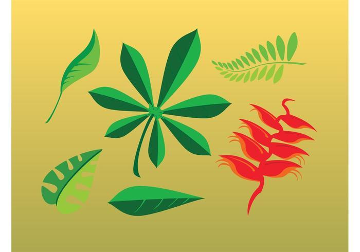 Leaves Cartoons