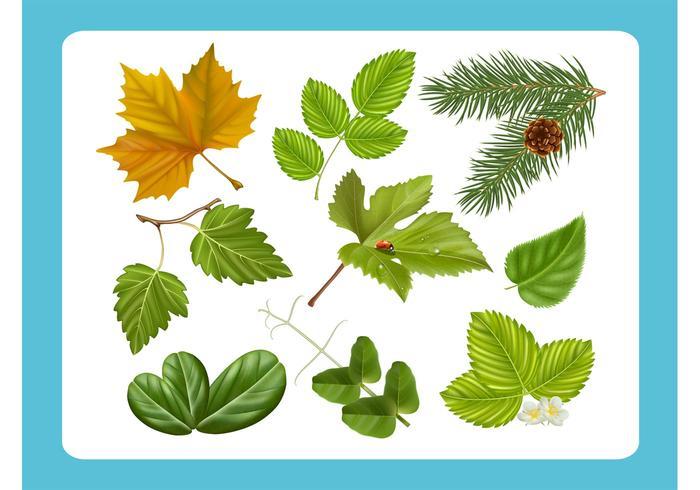 Vecteurs de feuilles réalistes