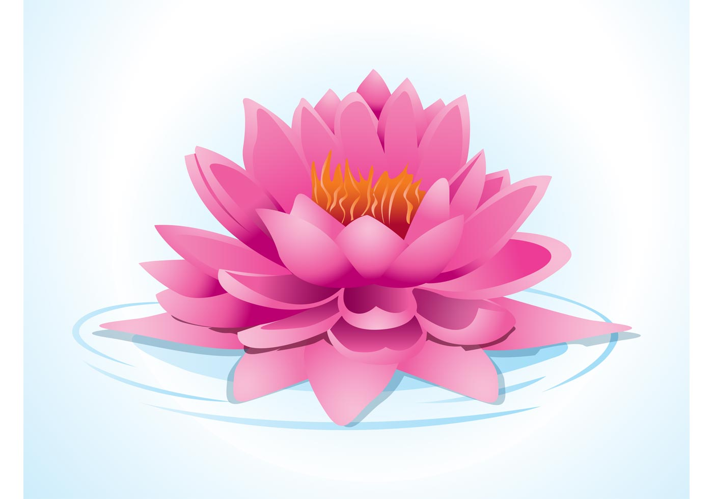 Lotus Flower Line Drawing Vector Free Download : Pink lotus download free vector art stock graphics images