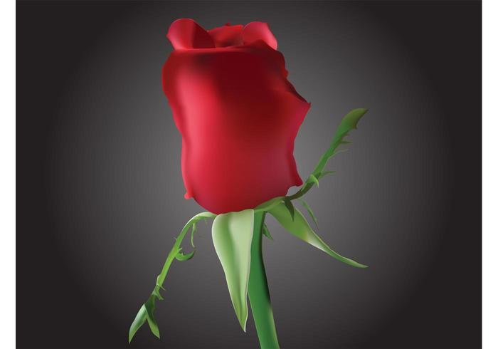 Romantic Rosebud