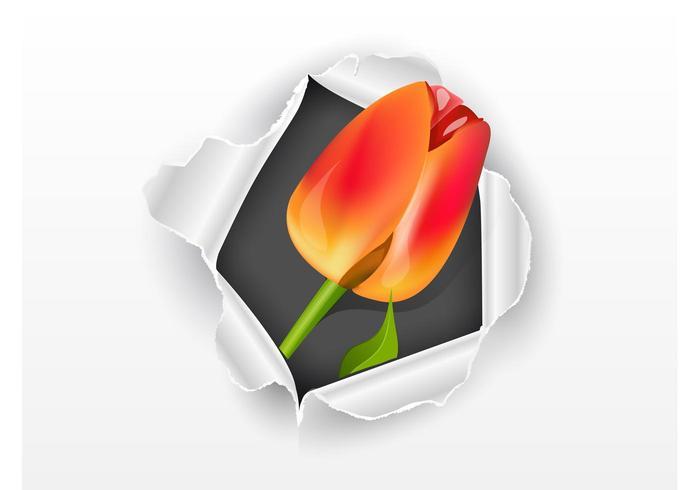 Papier et tulipe
