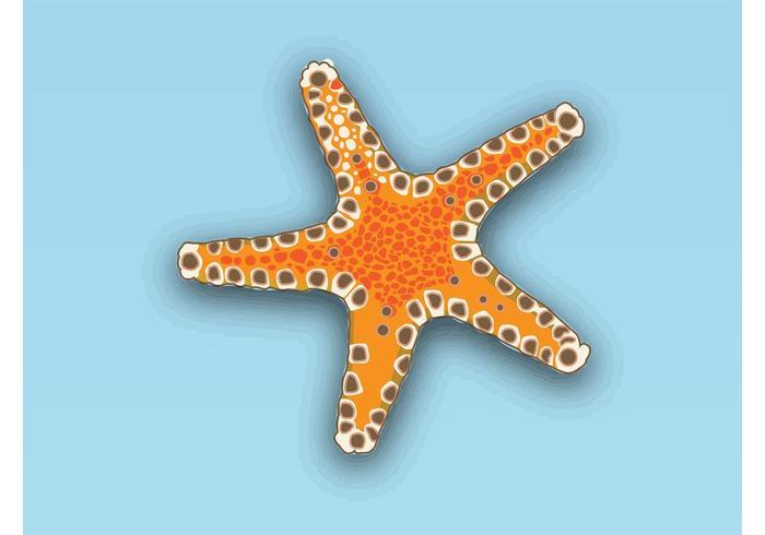 Vector de estrellas de mar