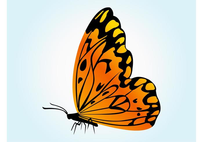 Orange Butterfly Vector