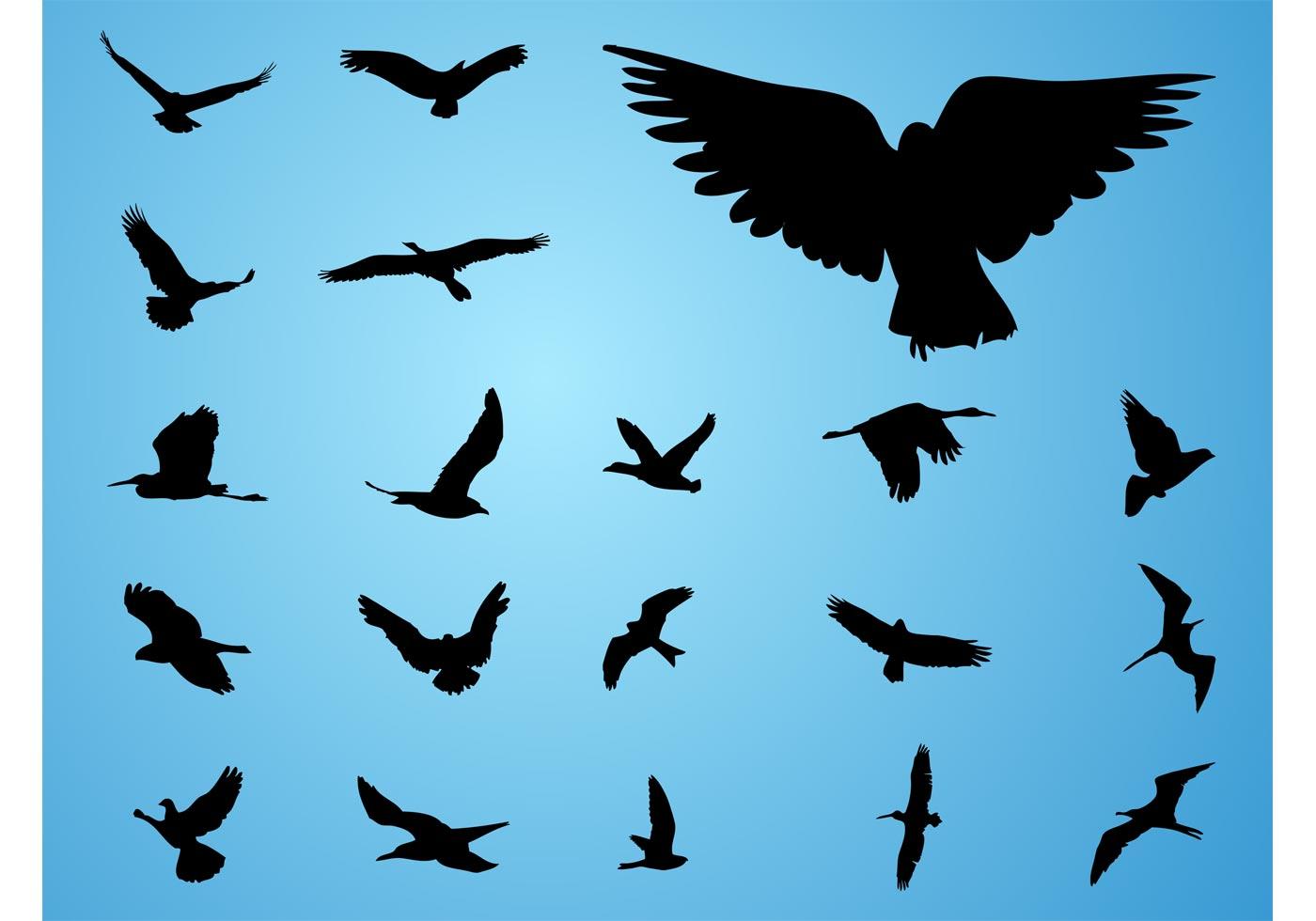 Vector Birds - Download Free Vector Art, Stock Graphics ... - photo#39