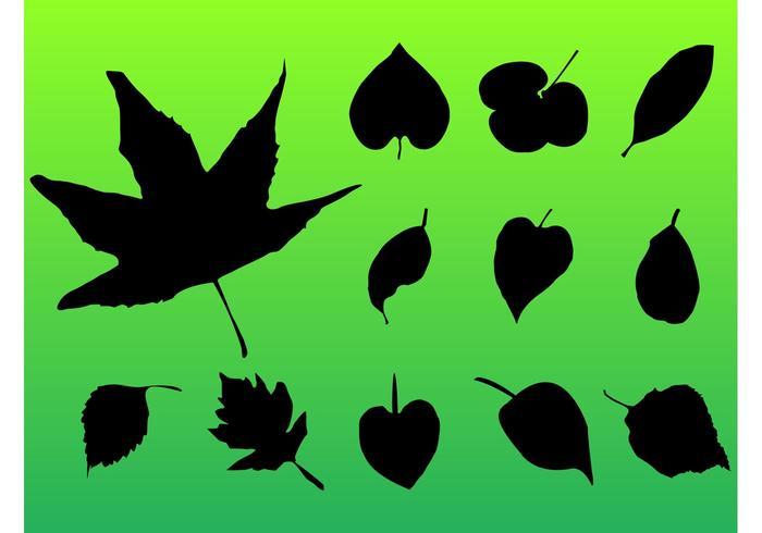 Pacote de folhas