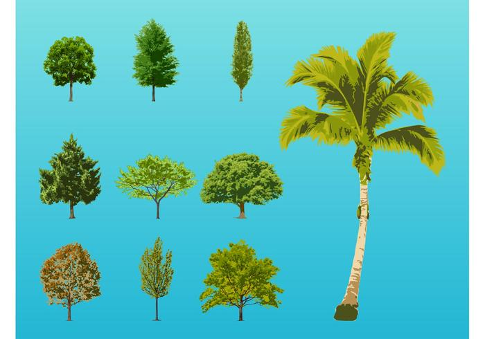 Trees Illustrations