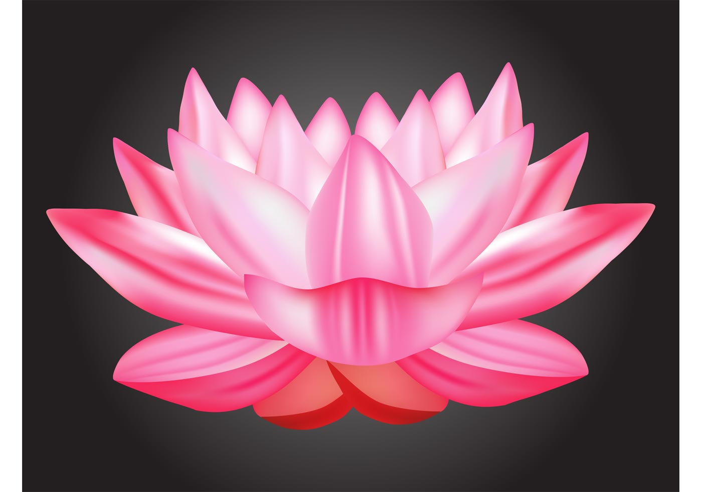 Lotus Vector Download Free Vector Art Stock Graphics Images