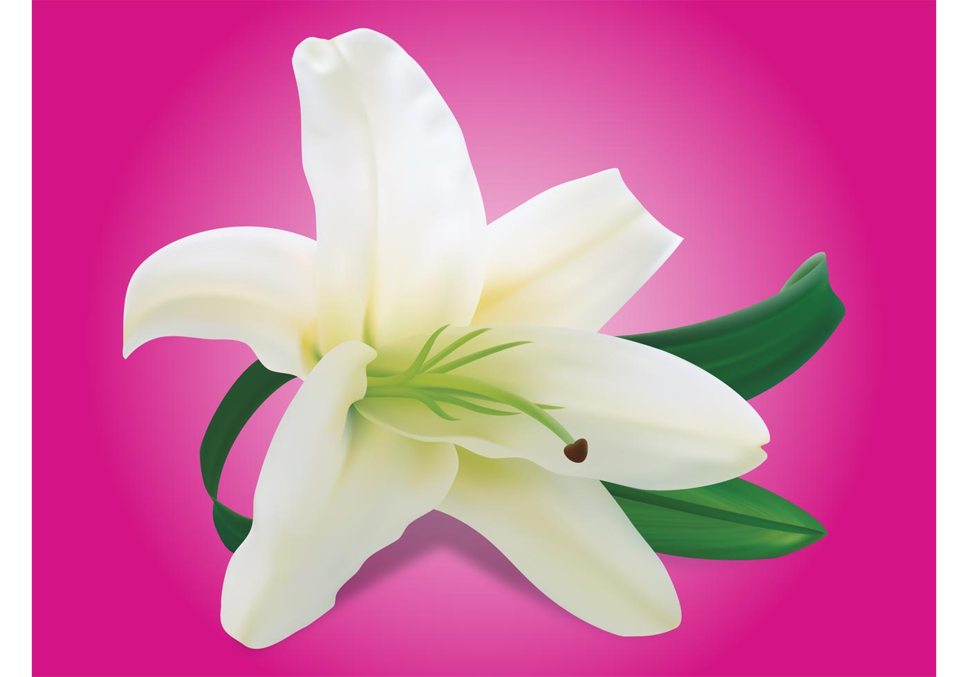 Lily flower download free vector art stock graphics images izmirmasajfo