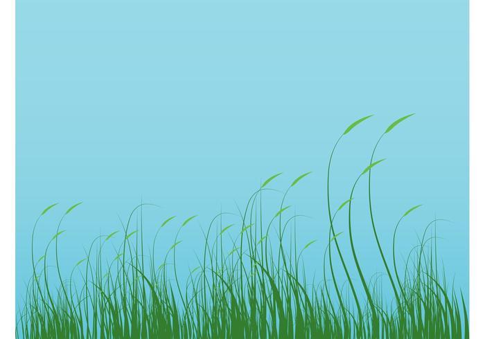 Grass Graphics