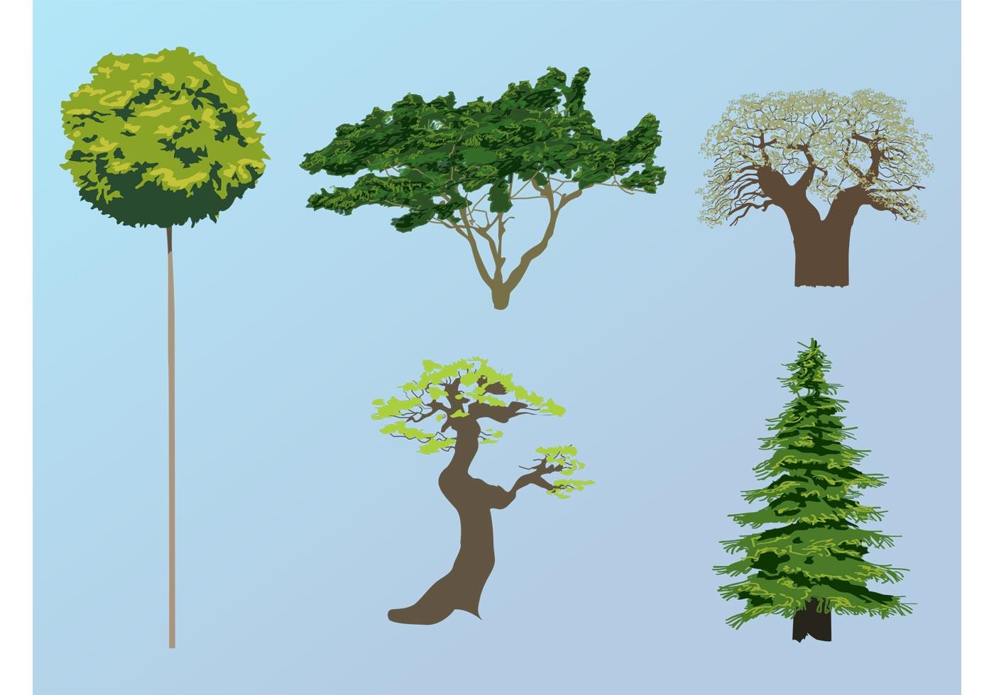 Vector Illustration Tree: Download Free Vector Art, Stock Graphics