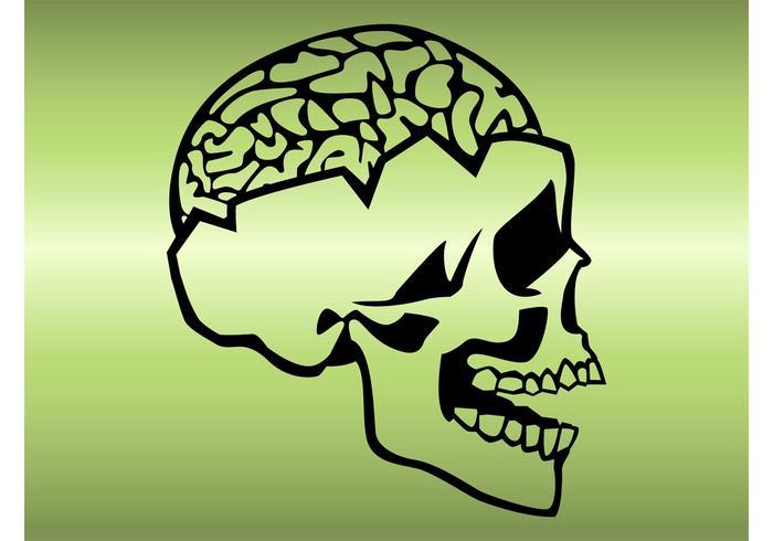 Skull And Brain