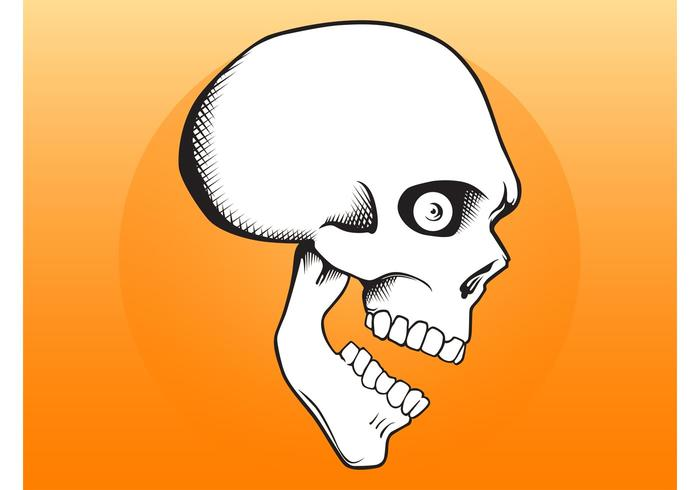 Cartoon Skull