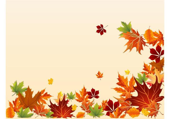 Fall Footage