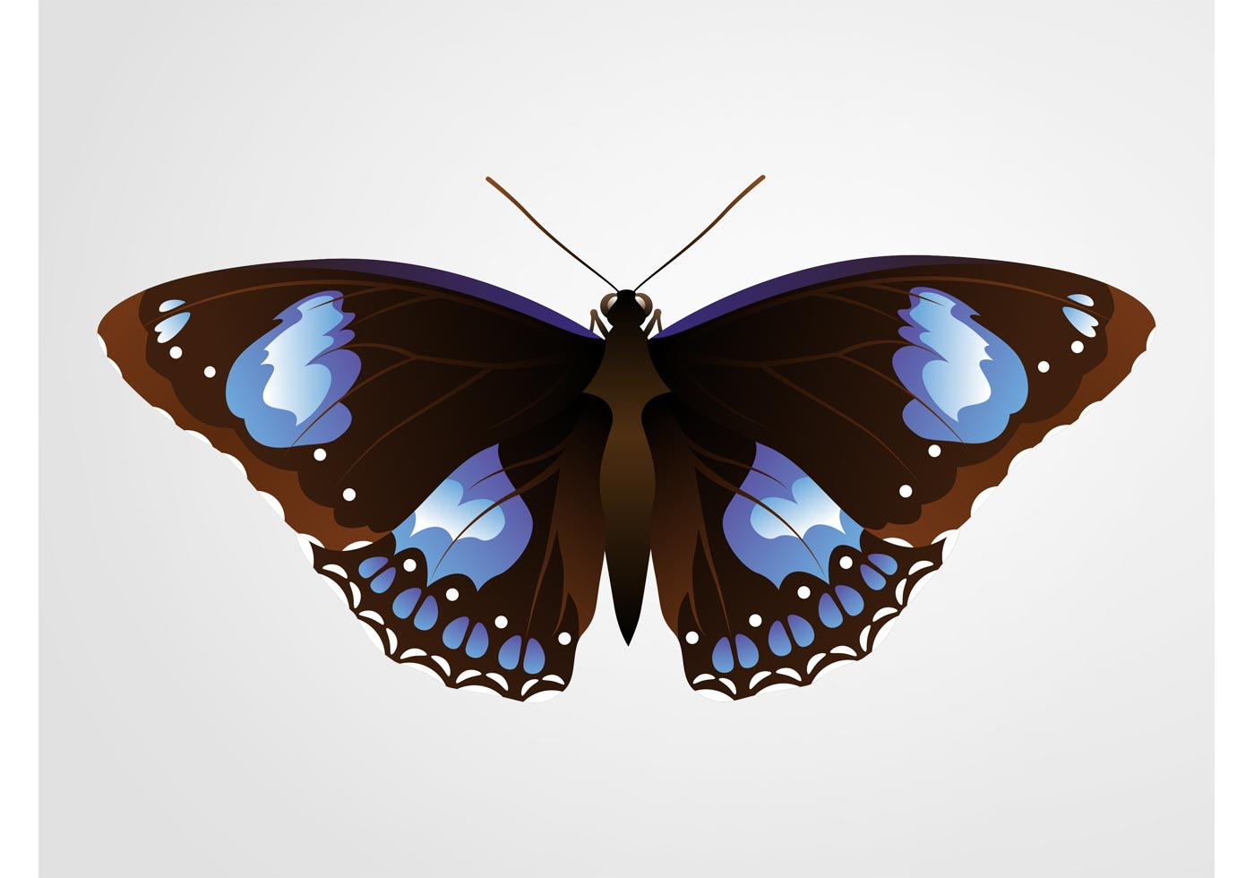 pretty butterfly download free vector art stock