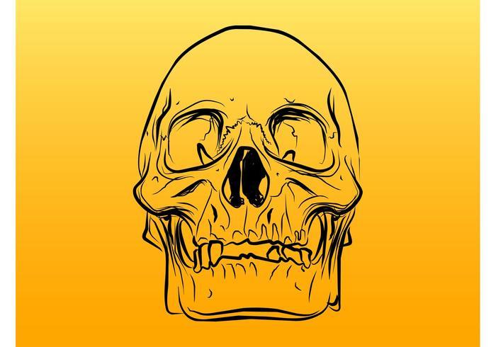 Skull Outlines Vector