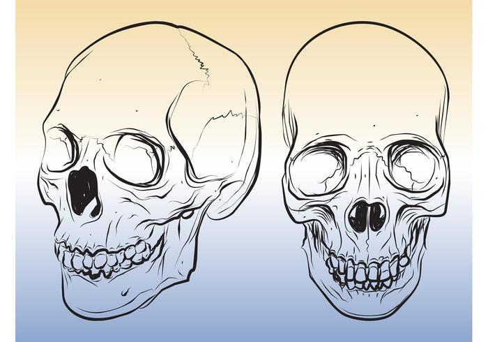 skull sketches download free vector art stock graphics images