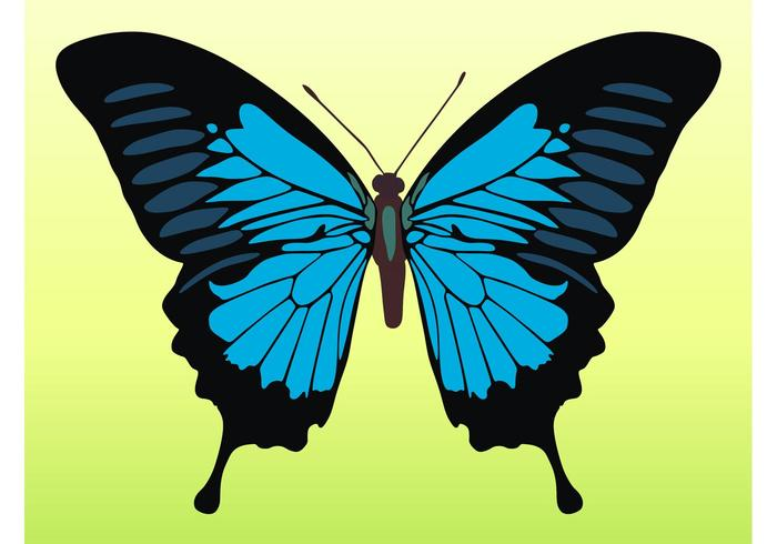 Pretty Butterfly Vector