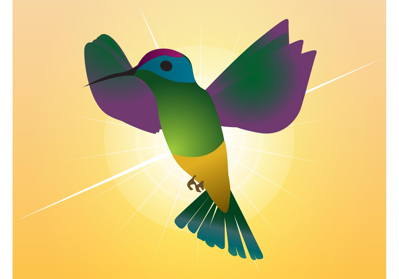 humming bird free vector art 11876 free downloads
