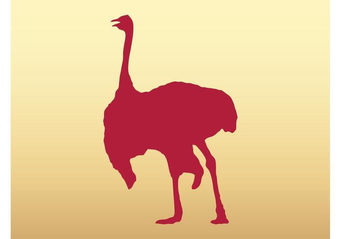 Walking Ostrich