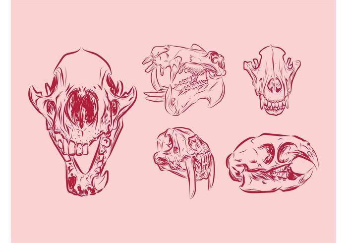 Crânios de animais