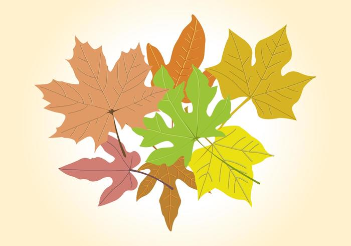 Autumn Vector Graphics