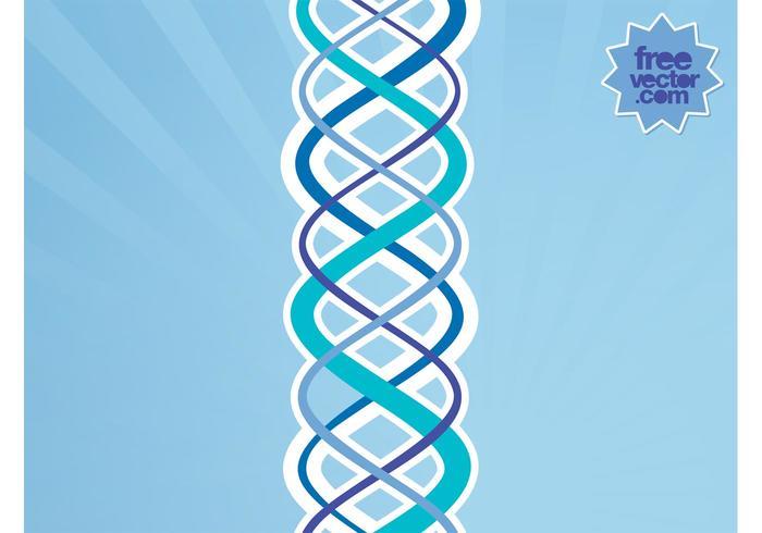 Vector DNA