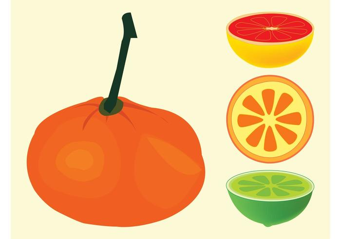 Citrus Fruits Vectors