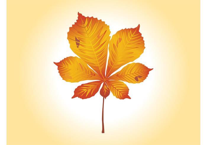 Autumn Leaf Vector Graphics