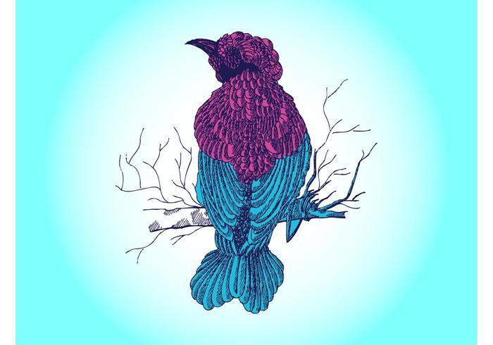 Bird Drawing Vector
