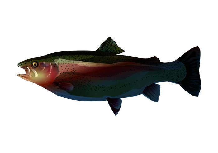 Trout Graphics