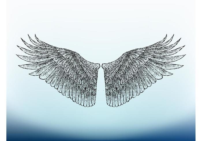 Bird Wings Image