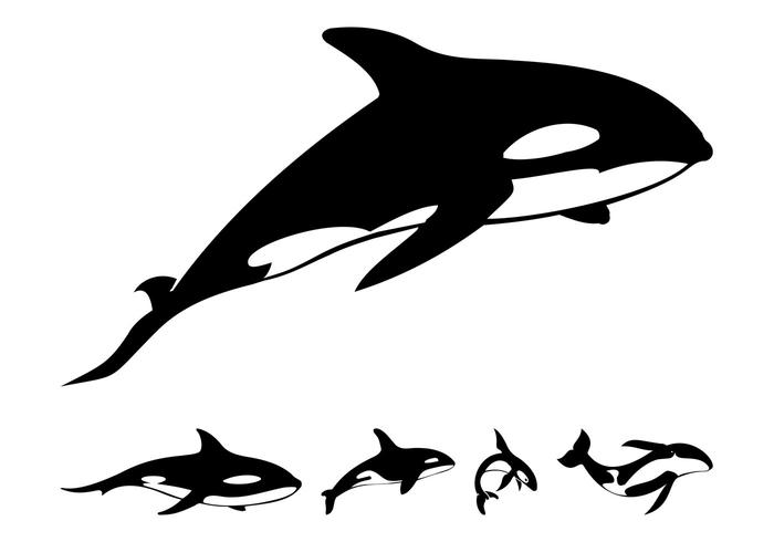 Killer Whale Silhouettes
