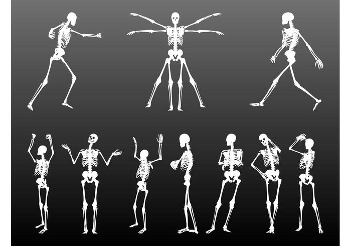 Human Skeletons Set