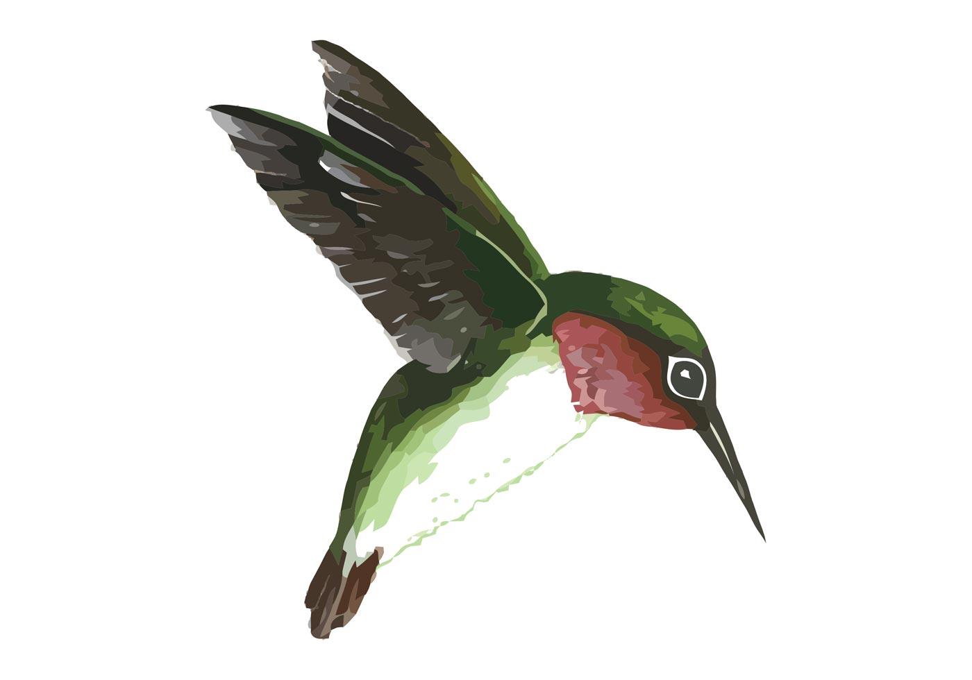 Best 25 Parrot drawing ideas on Pinterest  Animal pencil