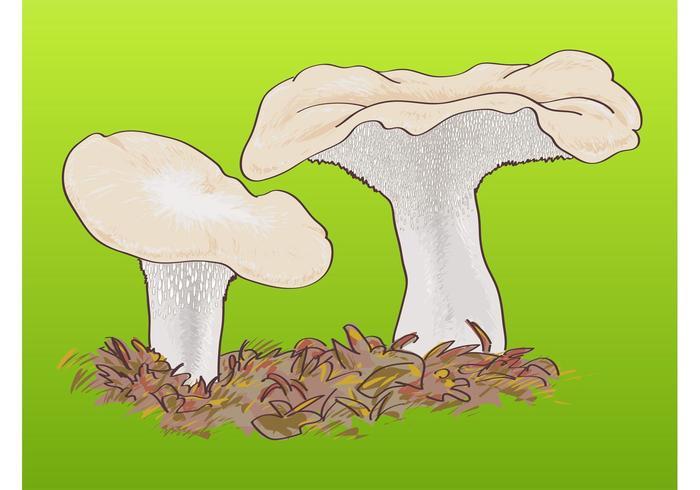 Wild Mushrooms Graphics