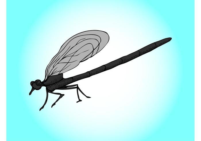 Cartoon Dragonfly Graphics