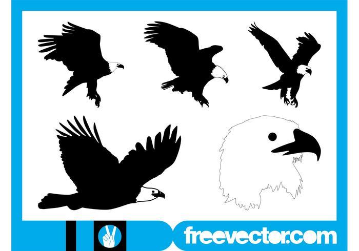 Bald Eagle Graphics