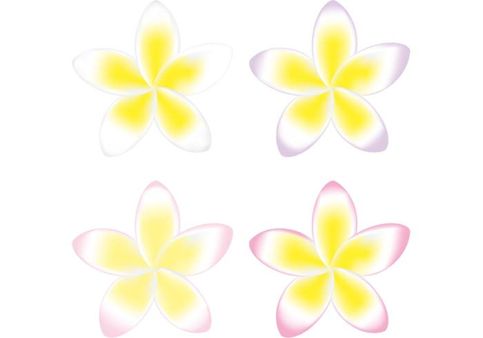 Polynesian Flower Vector Pack