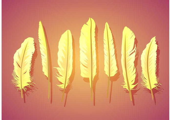 Vector Feather Isolated