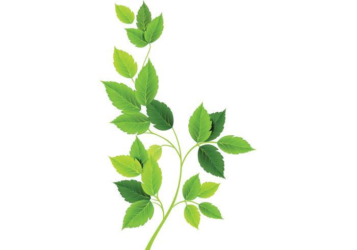 Grüne Blätter Vektoren