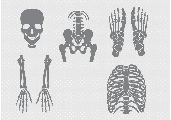 Bones and Joints Vectors