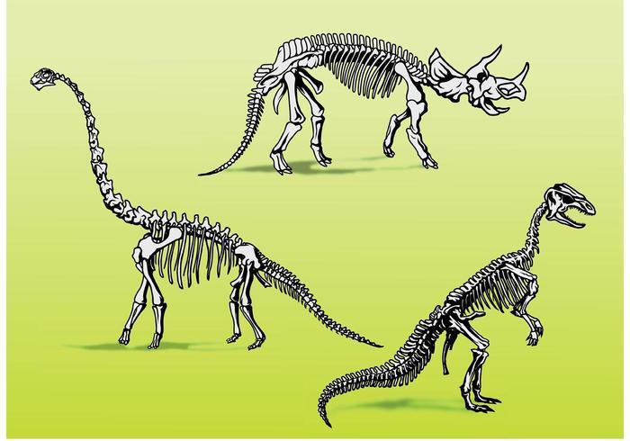 Scheletri di ossa di dinosauro