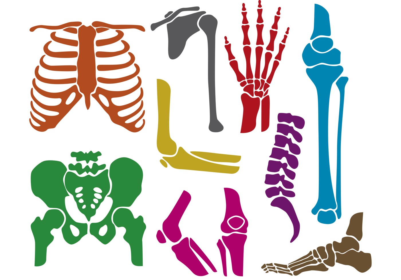 Bones And Joints Vector Silhouettes Download Free Vector