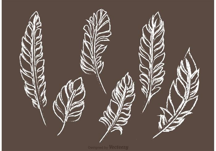 Chalk Drawn Feather Vector Pack