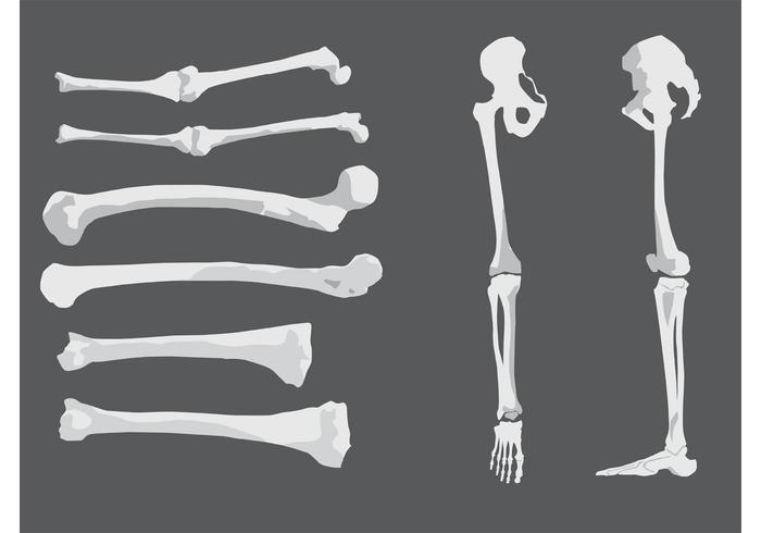 Free Human Vector Bones