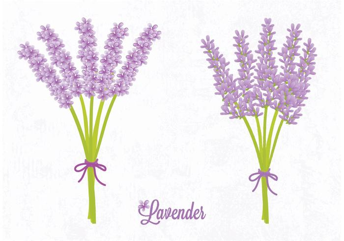 Vector Lavender Flower
