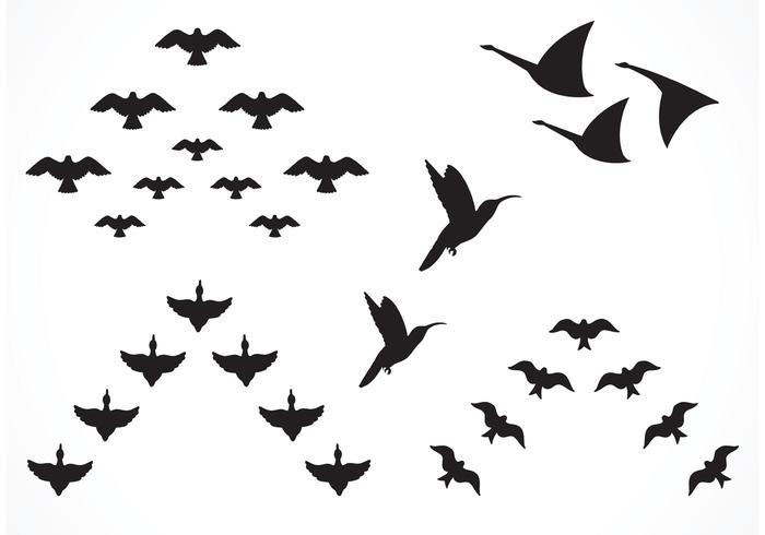Free Vector Flock Of Birds