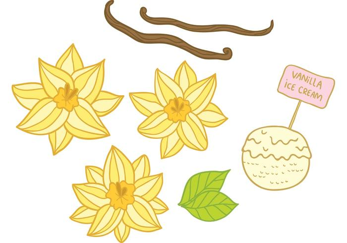 Hand Drawn Vanilla Flower Vectors
