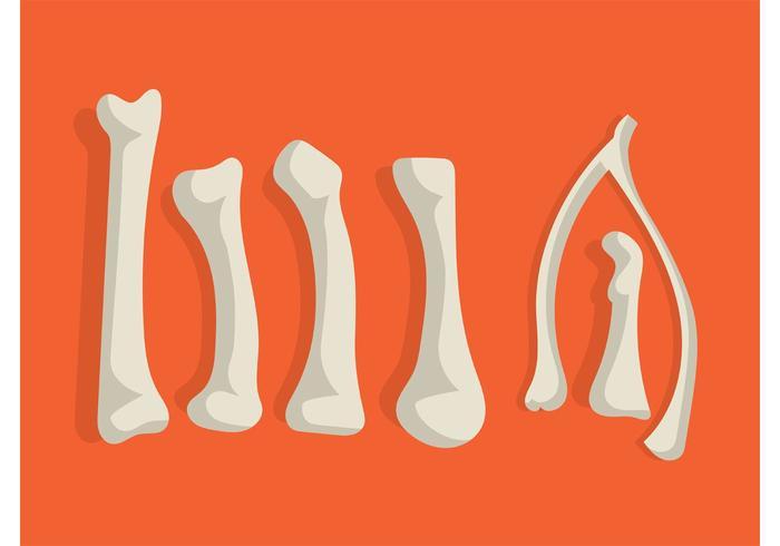 Vector huesos de pollo