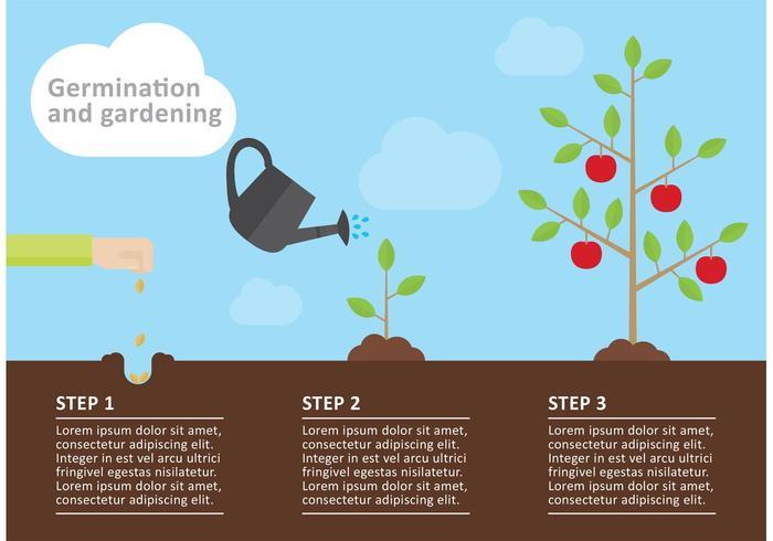 Gardening Infographic Vector